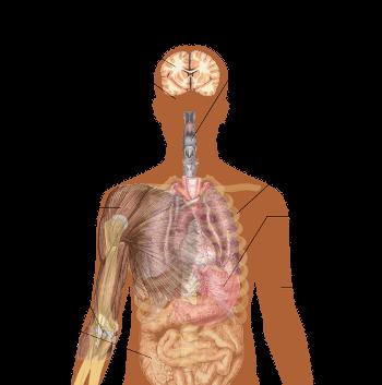 Symptoms of Ebola